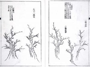 trees Met